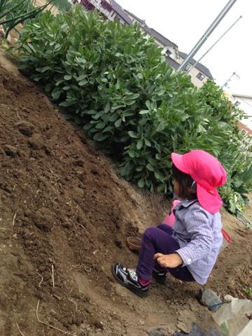 土作り、柔らかい状態