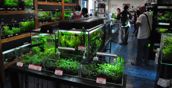 Aquabie for Aquarium shop