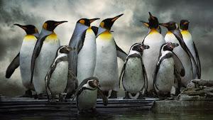 Google Penguin 3.0 ảnh hướng lớn hàng loạt webiste và cách SEO