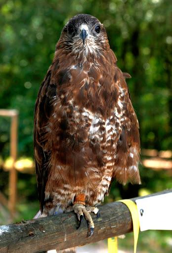 Parque Biológico da Serra das Meadas recebe novas espécies de animais