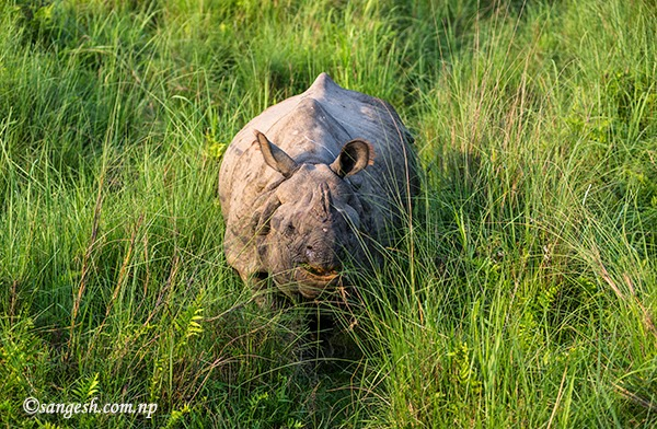Introduction to Wildlife at Royal Chitwan National Park