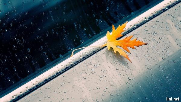 ảnh chiếc lá rụng trong mưa mùa thu