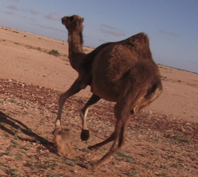 marrocos - Marrocos e Mauritãnia a Queimar Pneu e Gasolina - Página 10 DSCF1149
