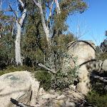 Walking amoung some granite boulders (297914)