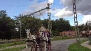 Szüreti felvonulás Jákó 2013.09.21. - Felvonulás Jákóban