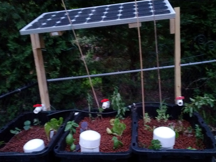Aquaponics setup May 17th
