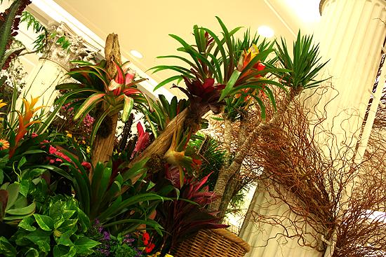 Bromeliad garden, Macy's Chicago Flower Show