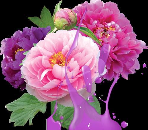 flores no tom roxo
