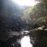 view from bridge crossing berowra creek (64679)