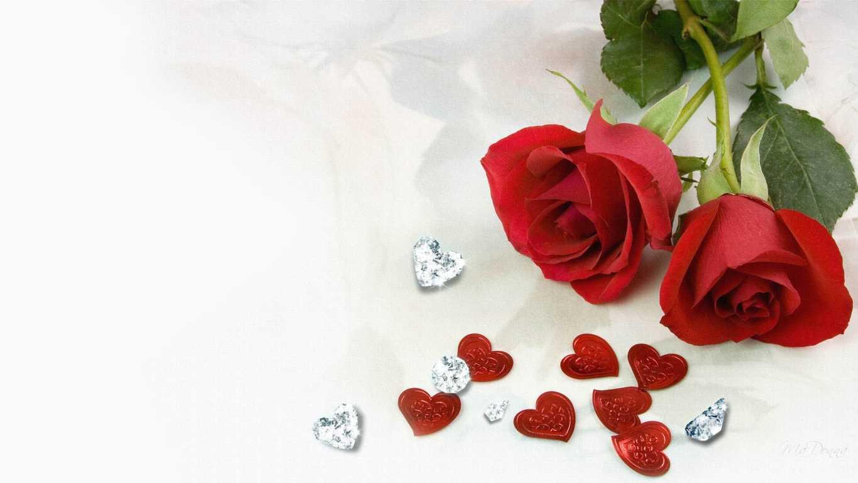 hình nền hoa hồng nhung