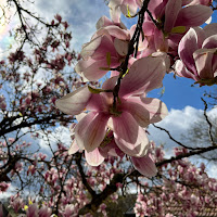 Profile picture of Vanda Lopes