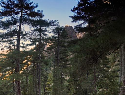 La végétation devient supra méditerranéenne puis montagnarde (comprenez pins laricci très dominant puis présence de sapins)...