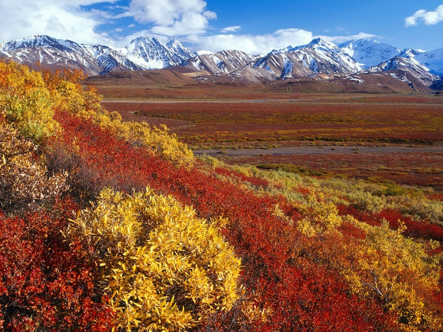 https://lh4.googleusercontent.com/-7ZQcoRPd39g/T-ma4puAbcI/AAAAAAAAFC8/ydqLIsC3pn0/s903/Alaska+Range%2C+Denali+National+Park%2C+Alaska.jpg
