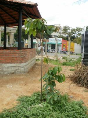 06-Jun-2011 Kadamba