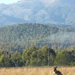 Kangaroo at Behrs Flat (292048)