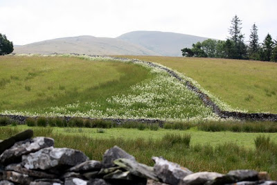 Stone walls in the Eden Valley in Cumbria
