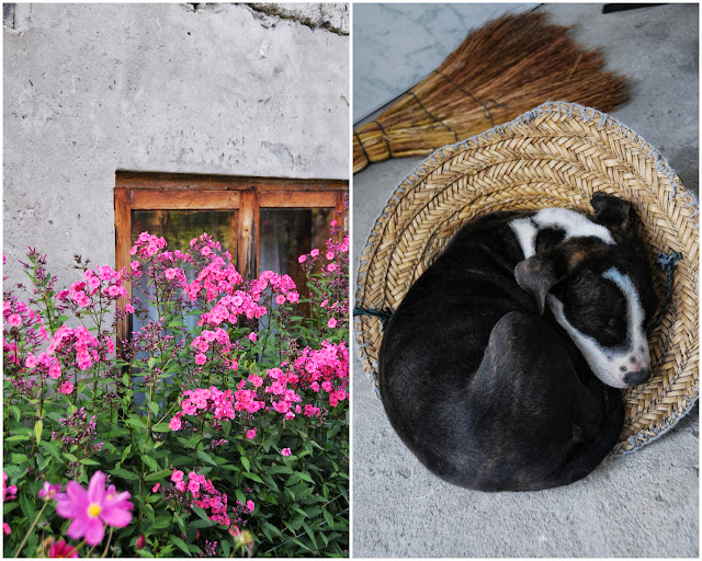 Puppy in straw hat svaneti georgia