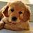 Quinten De Roeck avatar image