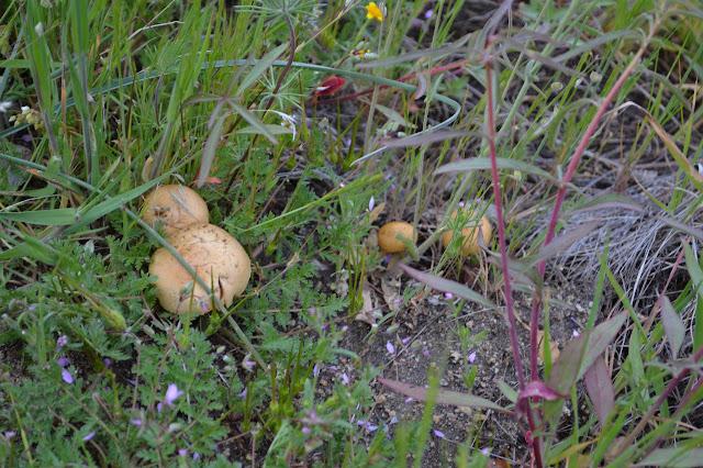 little orange mushrooms in the growth