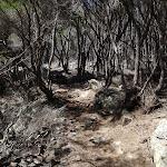Kangarutha Track south of Boulder Bay (102943)
