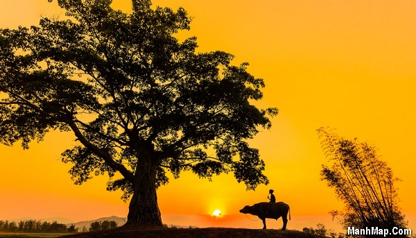 thơ quê hương với con trâu, cây đa