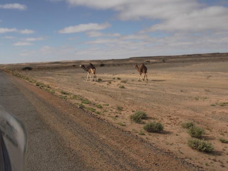 marrocos - Marrocos e Mauritãnia a Queimar Pneu e Gasolina - Página 10 DSCF1133
