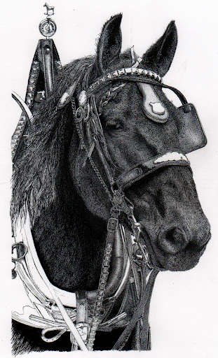 Percheron-2012-10-13-16-41.png