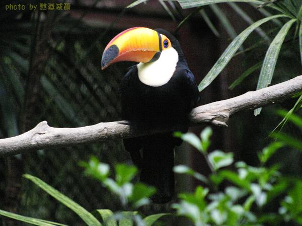 104春遊家庭日:去木柵動物園給動物看
