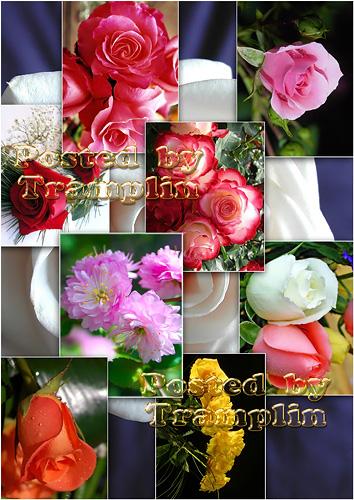 Прекрасные розы - Beautiful roses