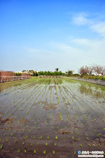 芬園花卉生產休憩園區 - 遼闊的稻田