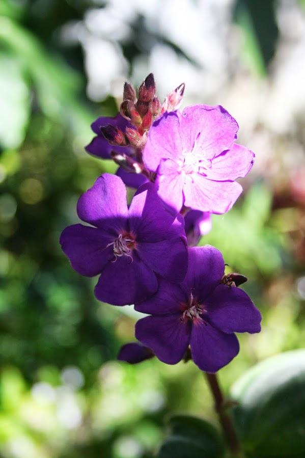 Un petit air de printemps... IMG_3871