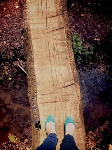 pod lemn parcul de sub arini sibiu