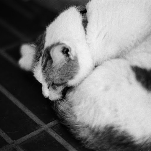 Ken Wan Photo 26