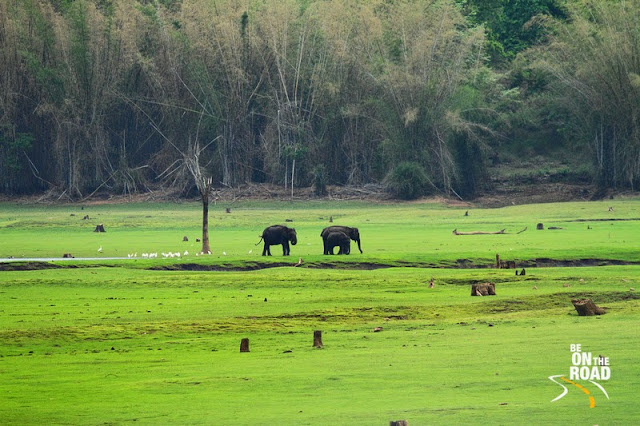 Elephants at Kabini in the monsoons