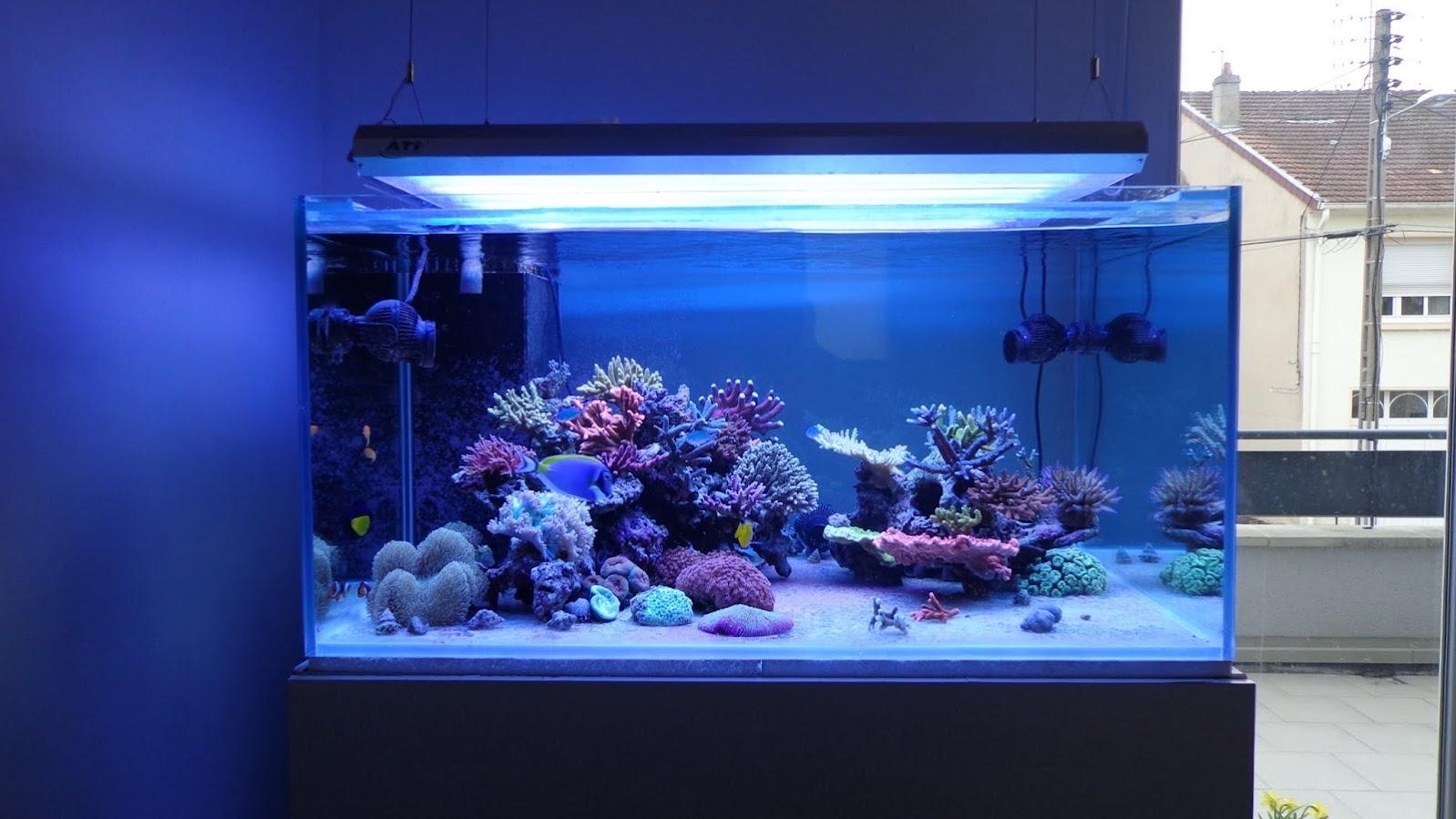 400 litres d'octopus DSC00971