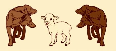 Avis vilku starpā