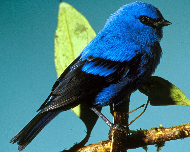 Маленькие синие птички картинки