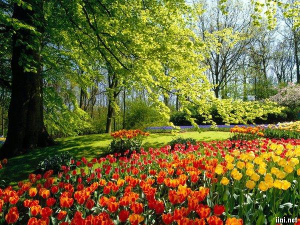 thơ hoa cỏ vườn xuân