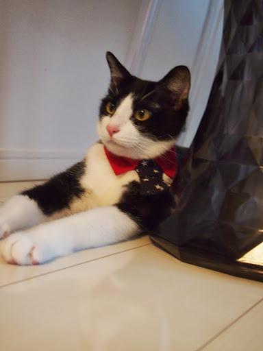 おもしろ猫ブログ とむびびのおうち