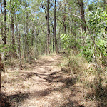Sid Pulsford Walking track  (236537)