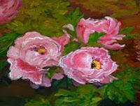 Morning rose peony