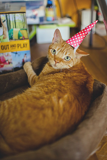 A Cat Birthday Celebration - A Cat in a Hat.