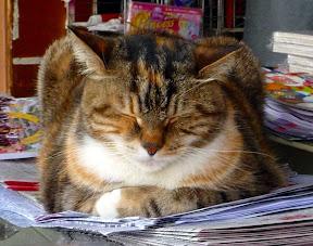 縮成一團的貓