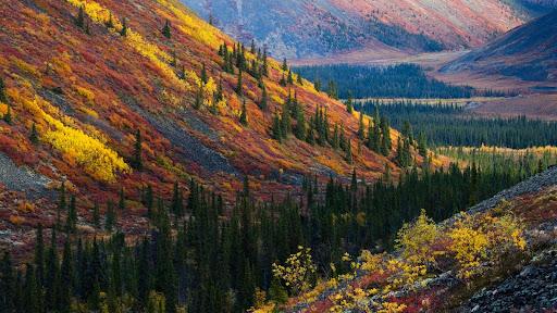 Autumn in the Ogilvie Mountains, Yukon, Canada.jpg