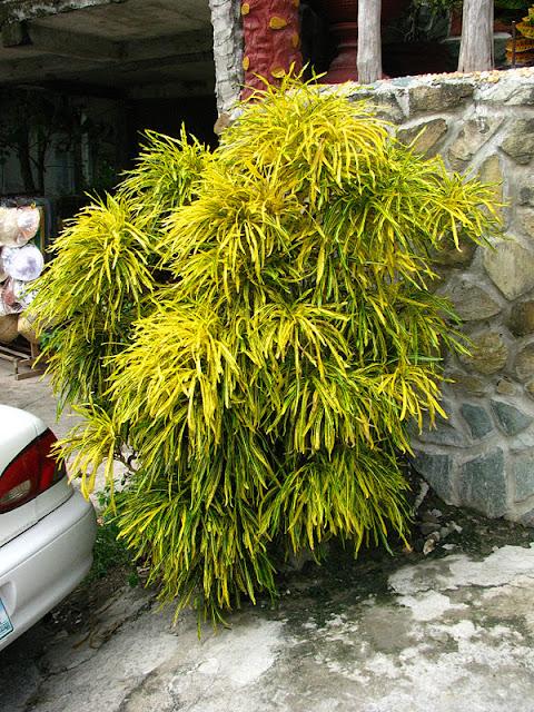 Из зимы в лето. Филиппины 2011 IMG_0012%252520%2525282%252529