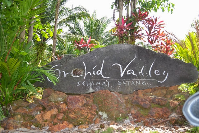 Lembah-Orkid-Orchid-Valley