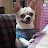 Dinaz Muncherji avatar image