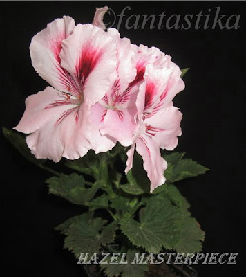 Красота без границ - Страница 7 Hazel%252520Masterpiece