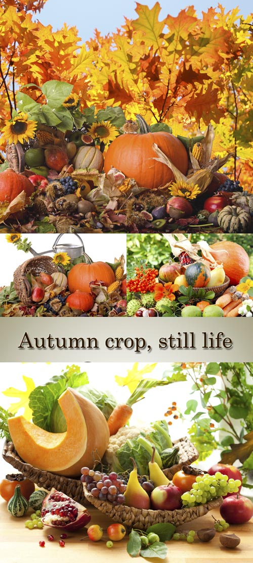 Stock Photo: Autumn crop, still life