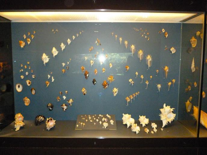 Musée d'Histoire Naturelle de Bruxelles Musée+d'Histoire+Naturelle+de+Bruxelles+(14)